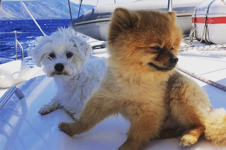 Sailing with dogs onboard